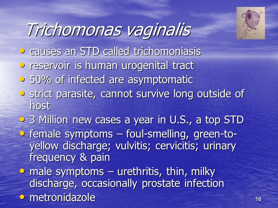 16 Trichomonas vaginalis causes an STD called trichomoniasis causes an STD called trichomoniasis reservoir is human urogenital tract reservoir is huma