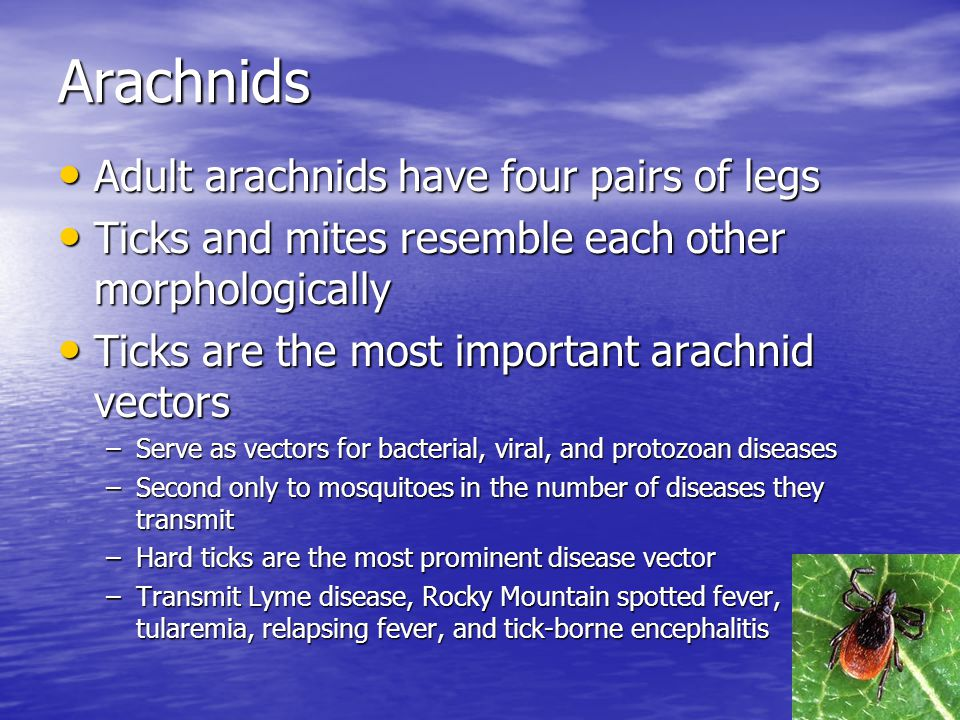 Arachnids Adult arachnids have four pairs of legs Adult arachnids have four pairs of legs Ticks and mites resemble each other morphologically Ticks an
