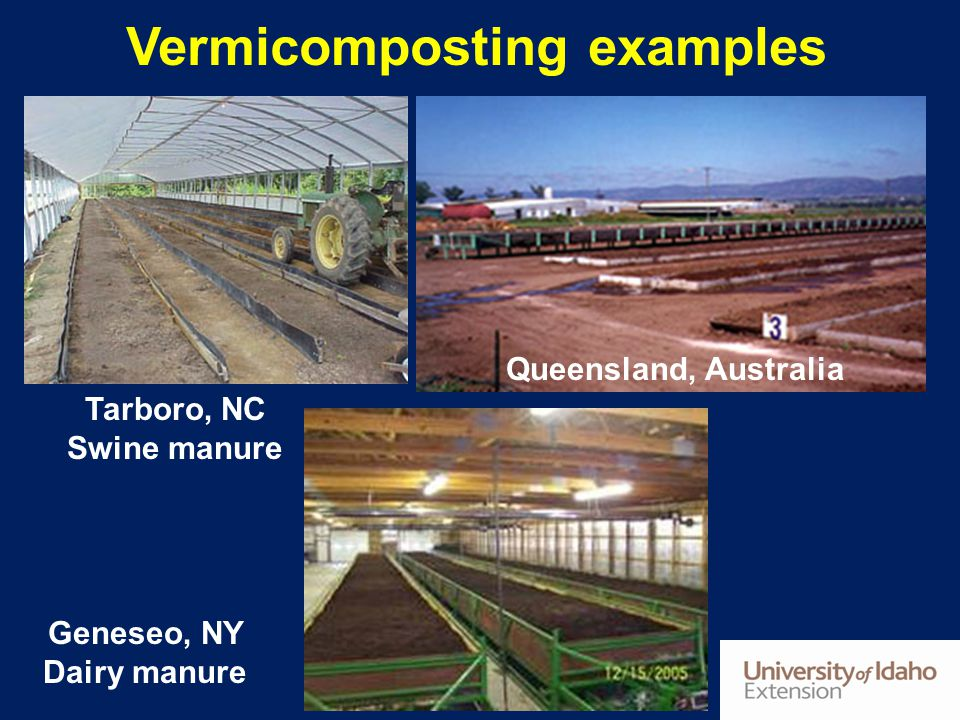 Vermicomposting examples Queensland, Australia Tarboro, NC Swine manure Geneseo, NY Dairy manure