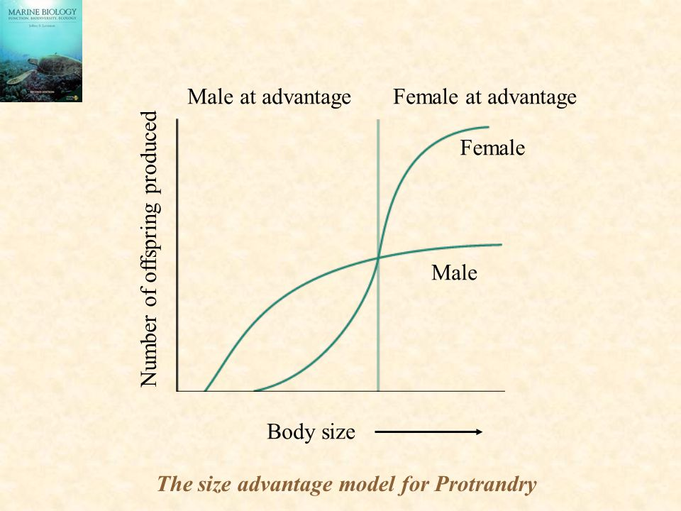 Male at advantage Female at advantage Female Male Body size Number of offspring produced The size advantage model for Protrandry