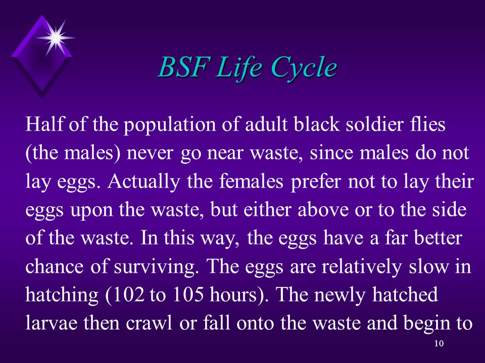 10 BSF Life Cycle Half of the population of adult black soldier flies (the males) never go near waste, since males do not lay eggs.