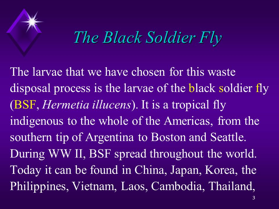 4 The Black Soldier Fly Indonesia, Singapore and even Australia.