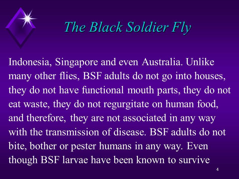 65 BSF Larvae in Winter