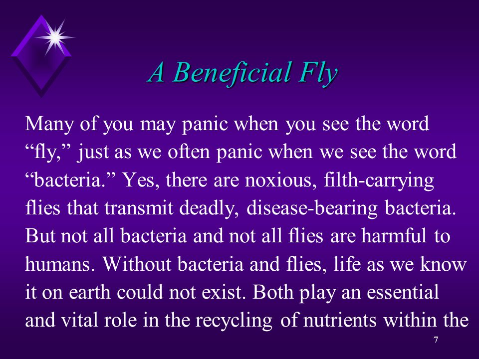 8 A Beneficial Fly food chain.