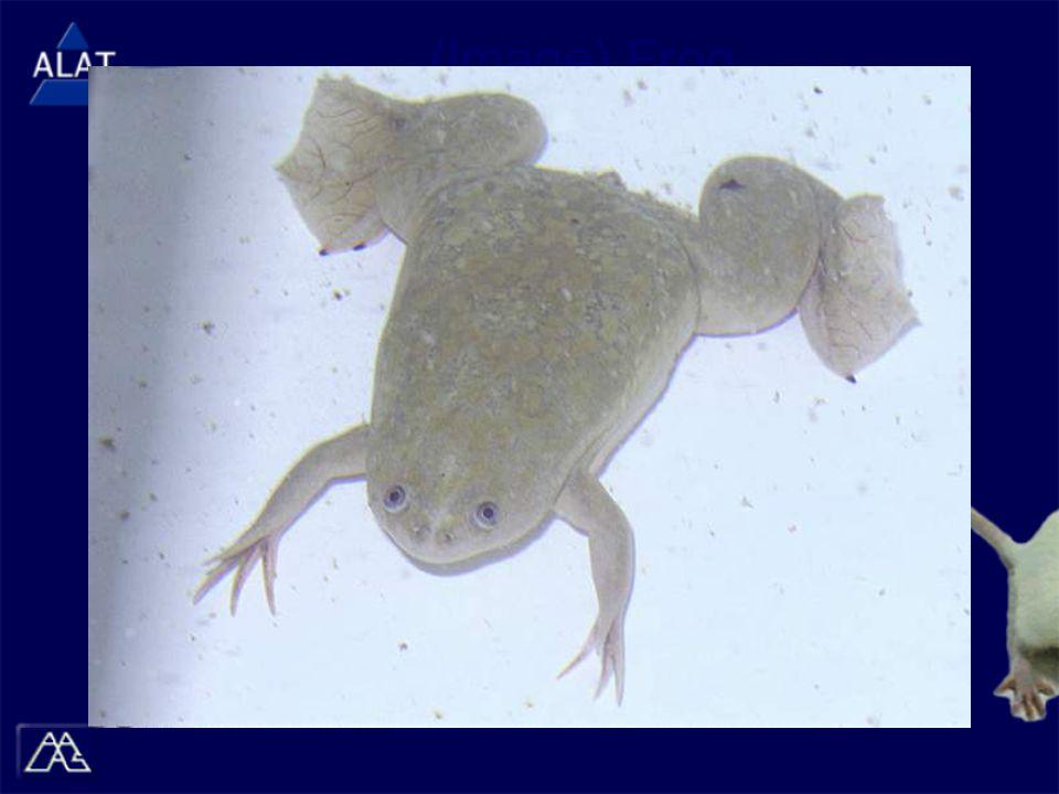 (Image) Frog