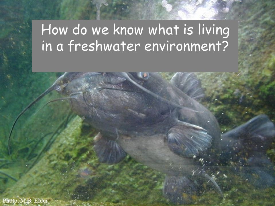 How do we know what is living in a freshwater environment? Photo: M.B. Elder