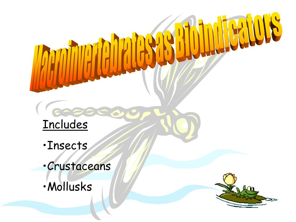 Includes Insects Crustaceans Mollusks