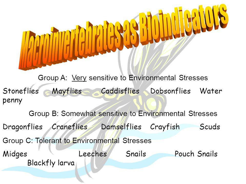 Group A: Very sensitive to Environmental Stresses StonefliesMayfliesCaddisfliesDobsonfliesWater penny Group B: Somewhat sensitive to Environmental Stresses DragonfliesCranefliesDamselfliesCrayfishScuds Group C: Tolerant to Environmental Stresses Midges LeechesSnailsPouch Snails Blackfly larva