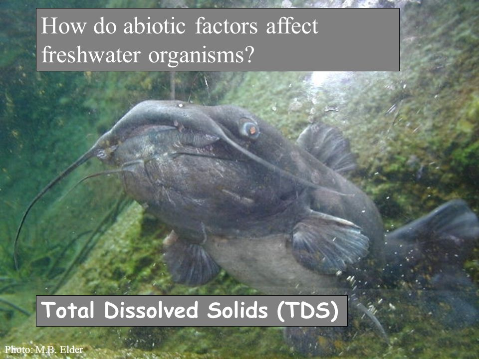 How do abiotic factors affect freshwater organisms Total Dissolved Solids (TDS) Photo: M.B. Elder