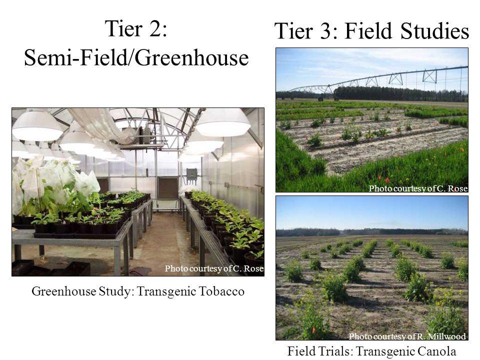 Tier 3: Field Studies Tier 2: Semi-Field/Greenhouse Greenhouse Study: Transgenic Tobacco Field Trials: Transgenic Canola Photo courtesy of C. Rose Pho
