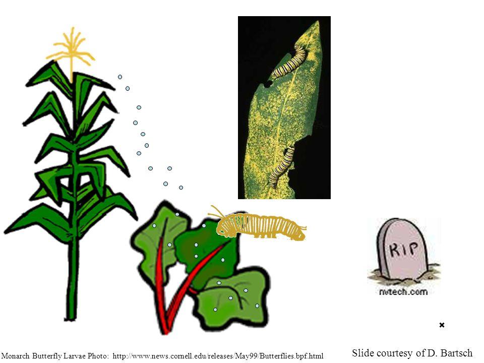 Monarch Butterfly Larvae Photo: http://www.news.cornell.edu/releases/May99/Butterflies.bpf.html