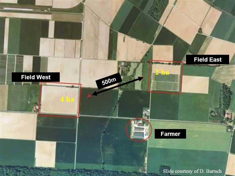 Farmer Field East Field West 500m 4 ha 2 ha Slide courtesy of D. Bartsch