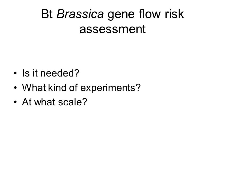 Bt Brassica gene flow risk assessment Is it needed What kind of experiments At what scale