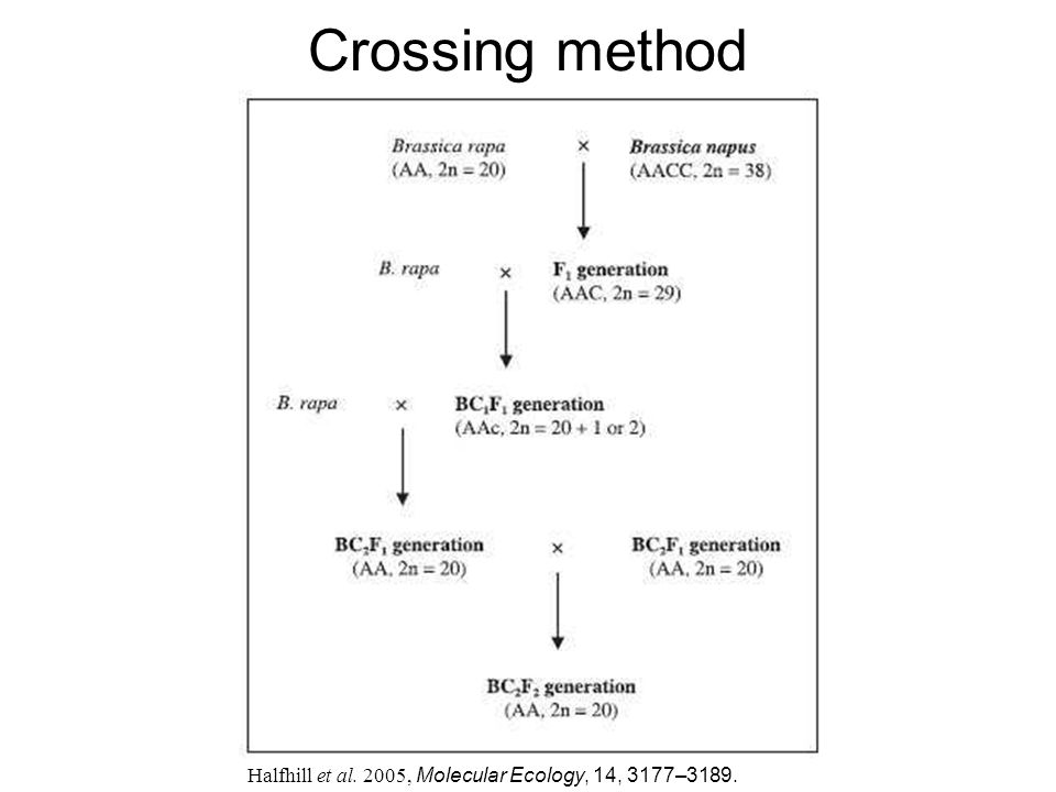 Crossing method Halfhill et al. 2005, Molecular Ecology, 14, 3177–3189.