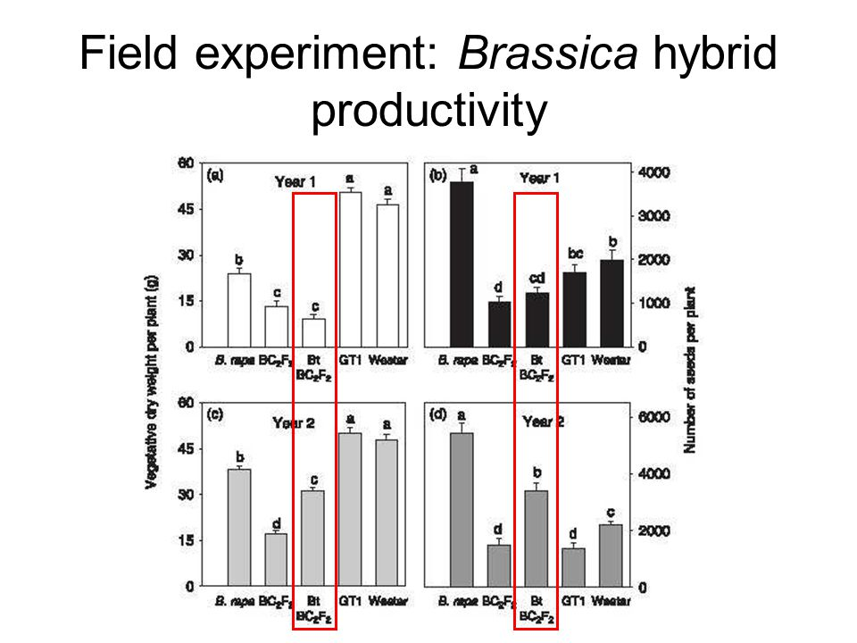 Field experiment: Brassica hybrid productivity