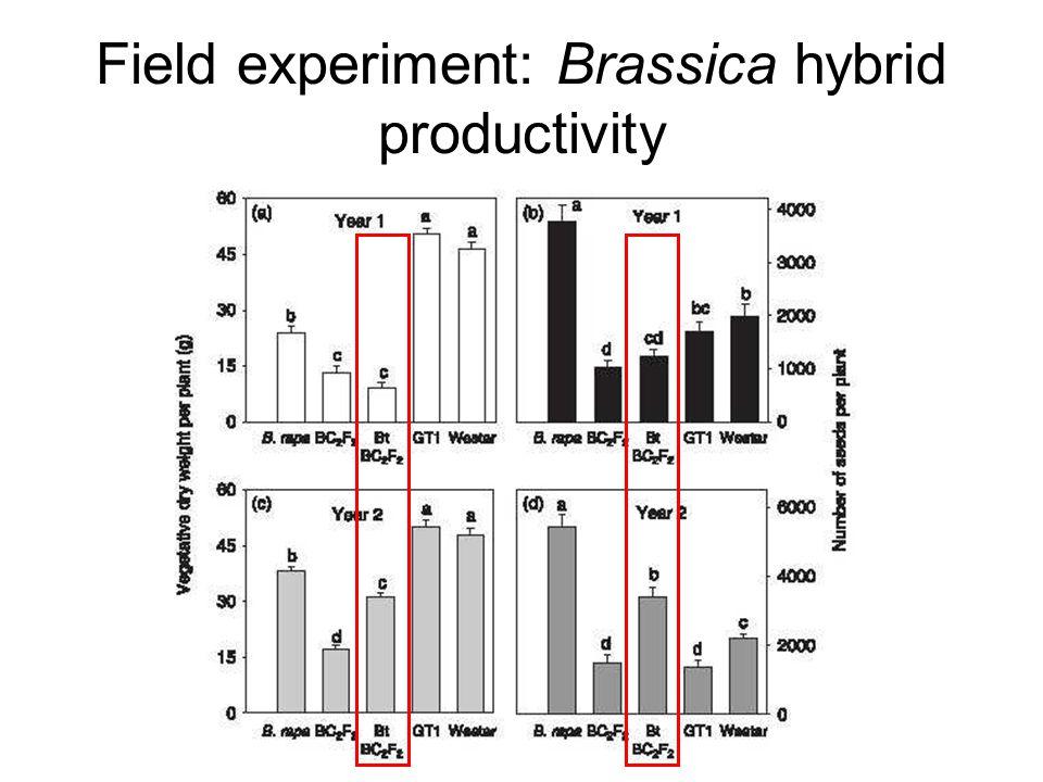 Field experiment: Brassica hybrid productivity