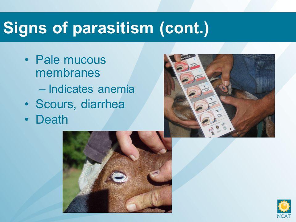 Pale mucous membranes –Indicates anemia Scours, diarrhea Death Signs of parasitism (cont.)