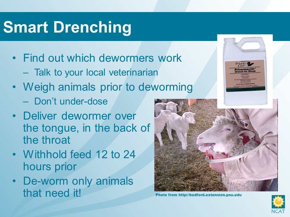 Find out which dewormers work –Talk to your local veterinarian Weigh animals prior to deworming –Don't under-dose Deliver dewormer over the tongue, in the back of the throat Withhold feed 12 to 24 hours prior De-worm only animals that need it.