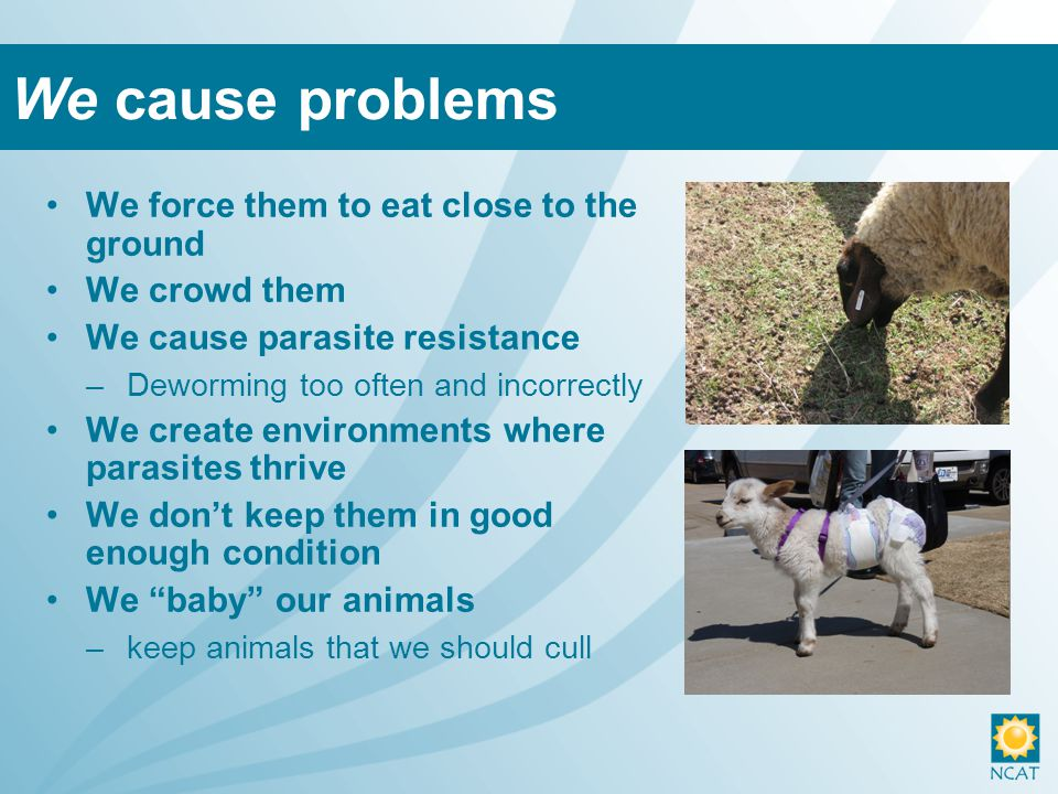 We force them to eat close to the ground We crowd them We cause parasite resistance –Deworming too often and incorrectly We create environments where parasites thrive We don't keep them in good enough condition We baby our animals –keep animals that we should cull We cause problems