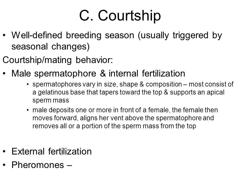 C. Courtship Well-defined breeding season (usually triggered by seasonal changes) Courtship/mating behavior: Male spermatophore & internal fertilizati