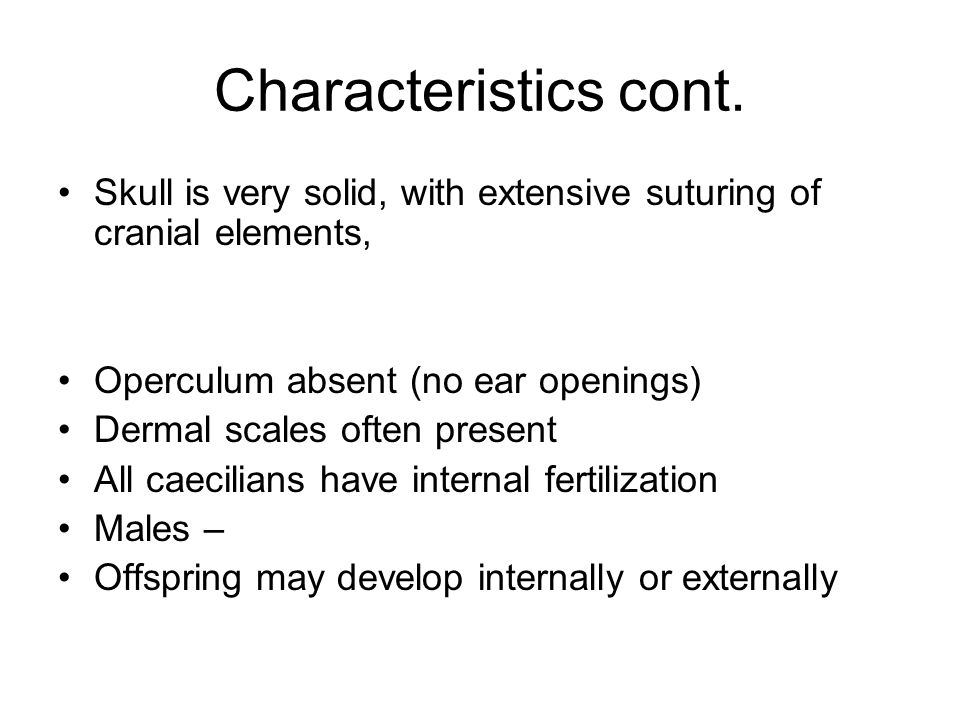 Characteristics cont. Skull is very solid, with extensive suturing of cranial elements, Operculum absent (no ear openings) Dermal scales often present