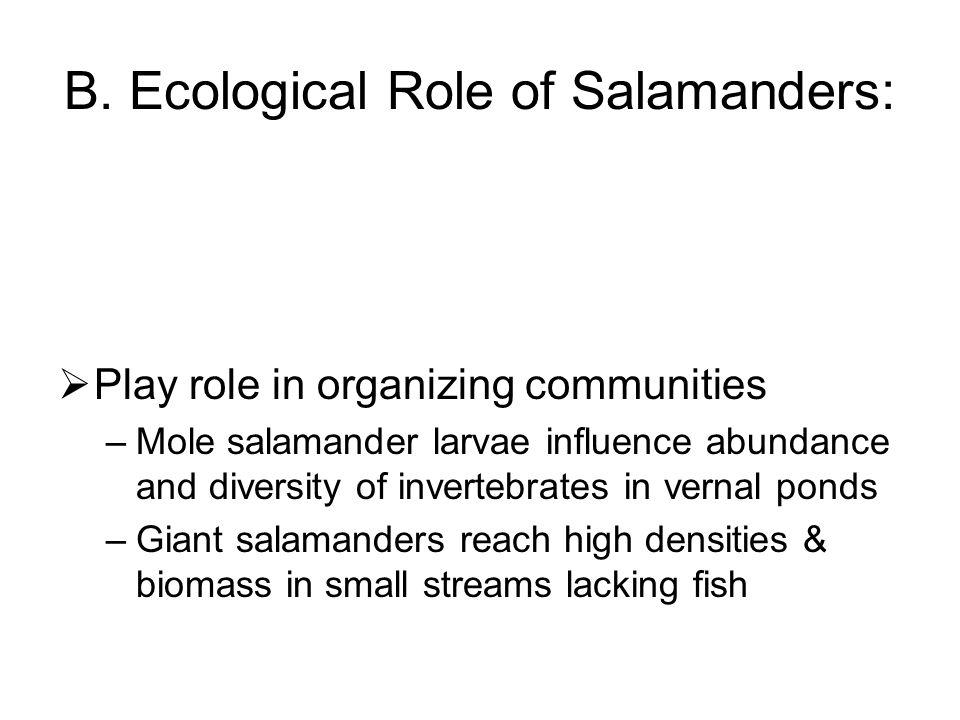 Larval Salamanders (cont.) Predators of aquatic invertebrates, some cannibalistic or feed on heterospecific larvae a)Vernal ponds = b)Streams =
