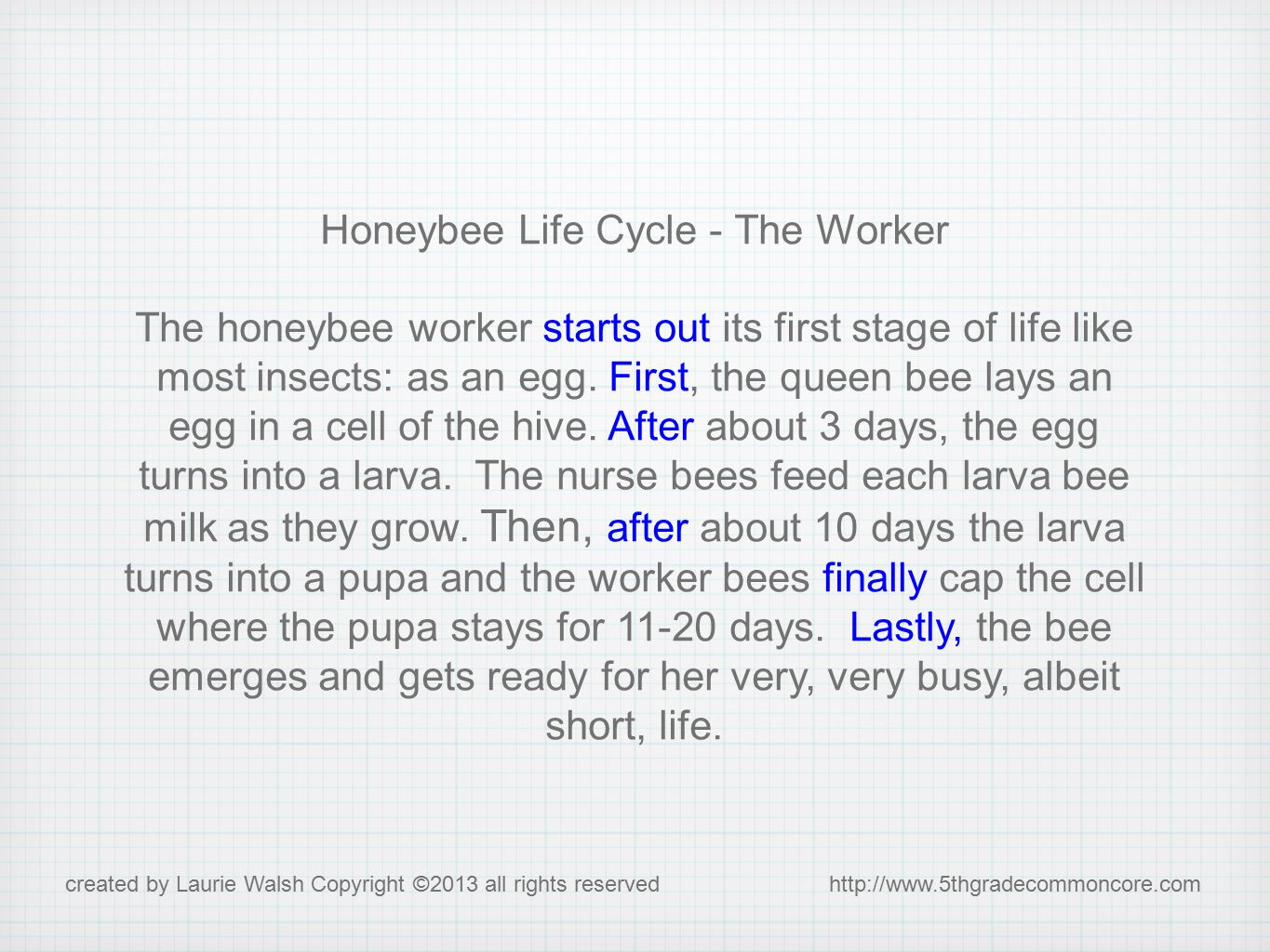 Honeybee Life Cycle - The Worker The honeybee worker starts out its first stage of life like most insects: as an egg.
