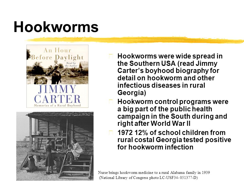 Hookworms zHookworms were wide spread in the Southern USA (read Jimmy Carter's boyhood biography for detail on hookworm and other infectious diseases in rural Georgia) zHookworm control programs were a big part of the public health campaign in the South during and right after World War II z1972 12% of school children from rural costal Georgia tested positive for hookworm infection Nurse brings hookworm medicine to a rural Alabama family in 1939 (National Library of Congress photo LC-USF34- 051377-D)