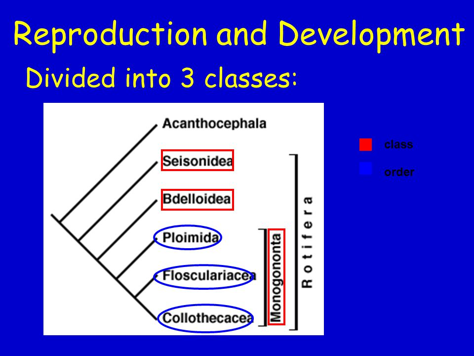 Divided into 3 classes: Reproduction and Development class order