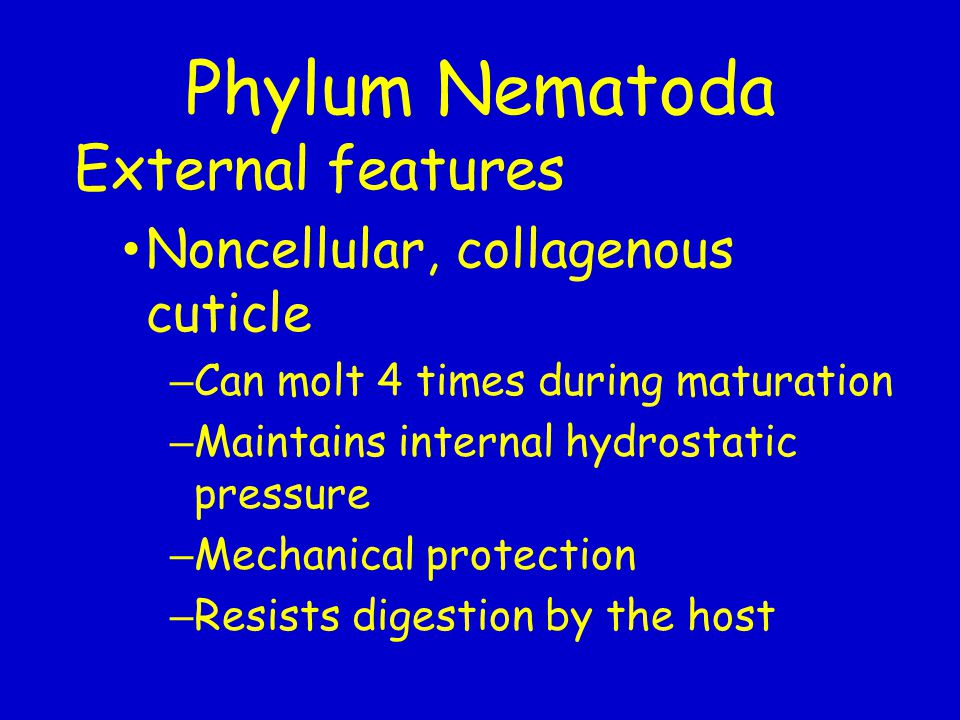 Phylum Nematoda External features Noncellular, collagenous cuticle – Can molt 4 times during maturation – Maintains internal hydrostatic pressure – Me