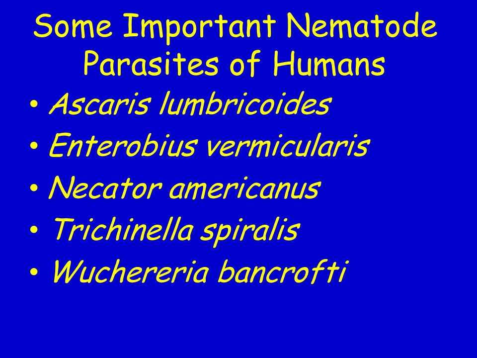 Some Important Nematode Parasites of Humans Ascaris lumbricoides Enterobius vermicularis Necator americanus Trichinella spiralis Wuchereria bancrofti