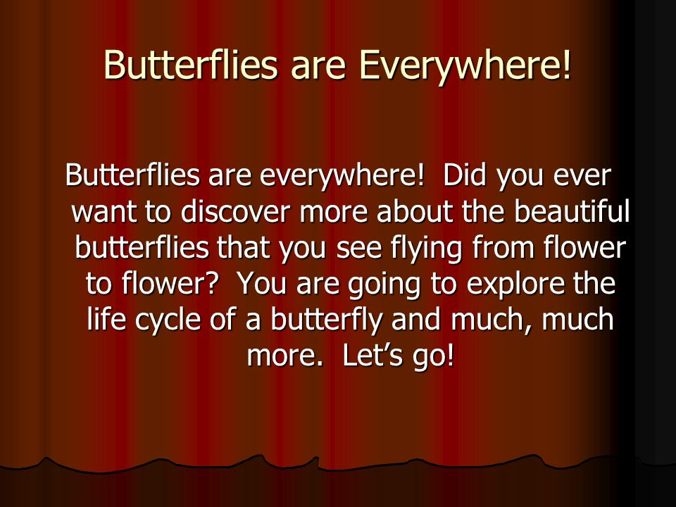 Butterflies are Everywhere. Butterflies are everywhere.