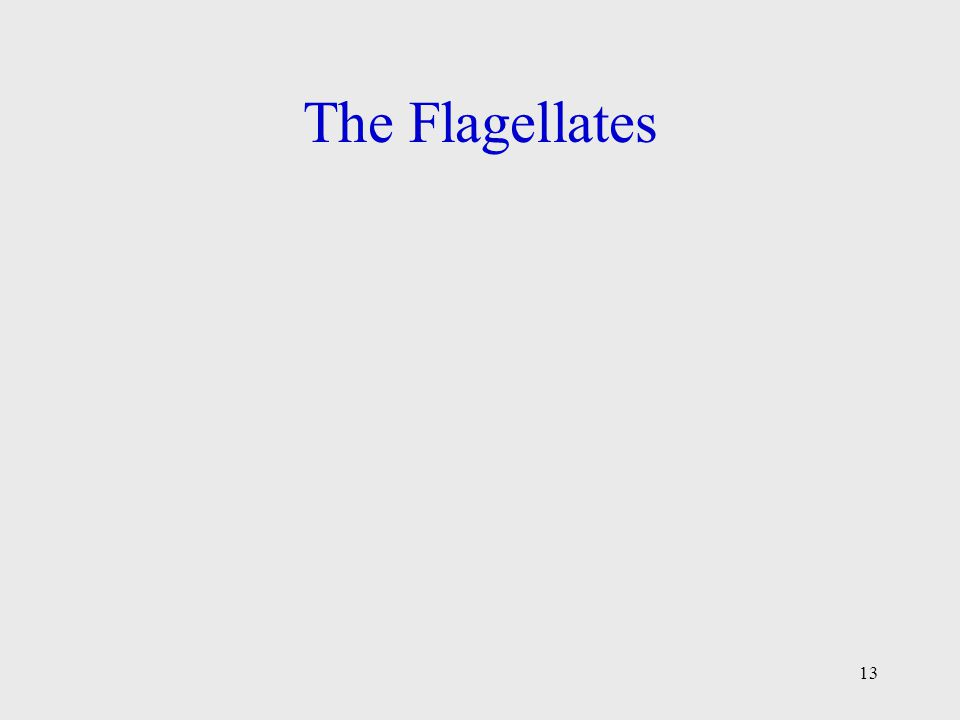 13 The Flagellates