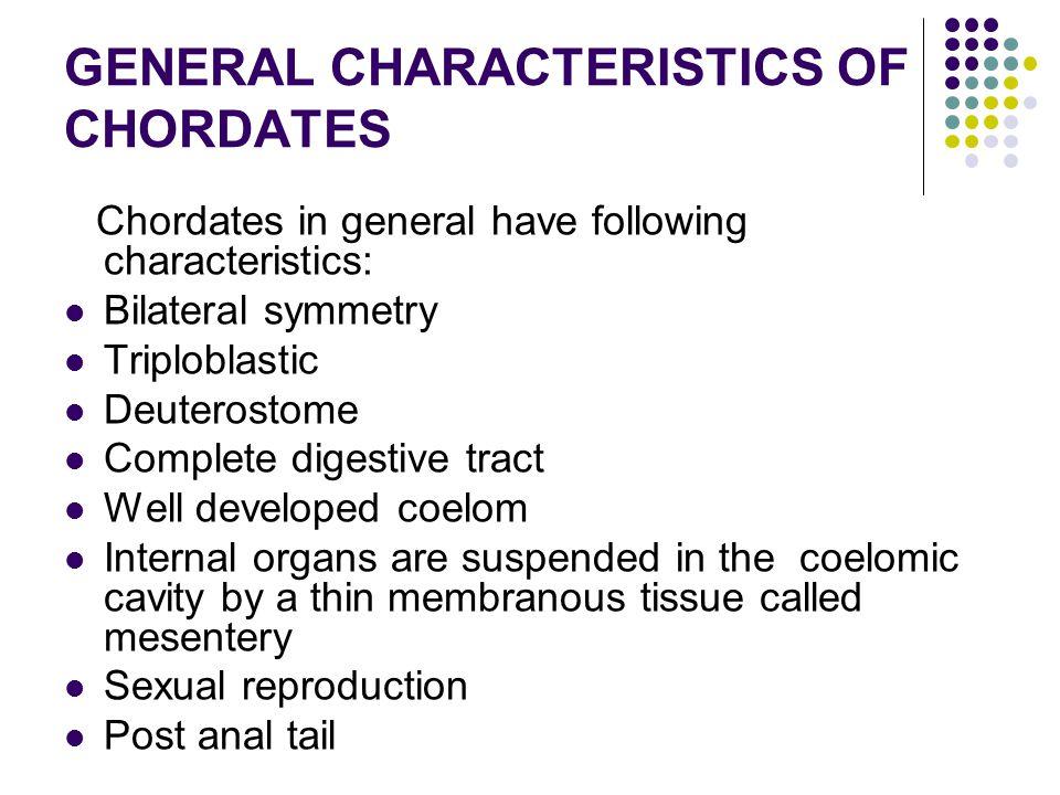 GENERAL CHARACTERISTICS OF CHORDATES Chordates in general have following characteristics: Bilateral symmetry Triploblastic Deuterostome Complete diges