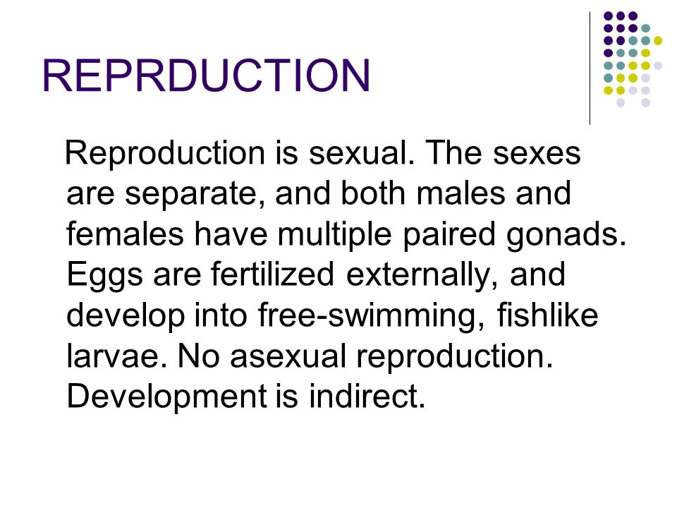 REPRDUCTION Reproduction is sexual. The sexes are separate, and both males and females have multiple paired gonads. Eggs are fertilized externally, an