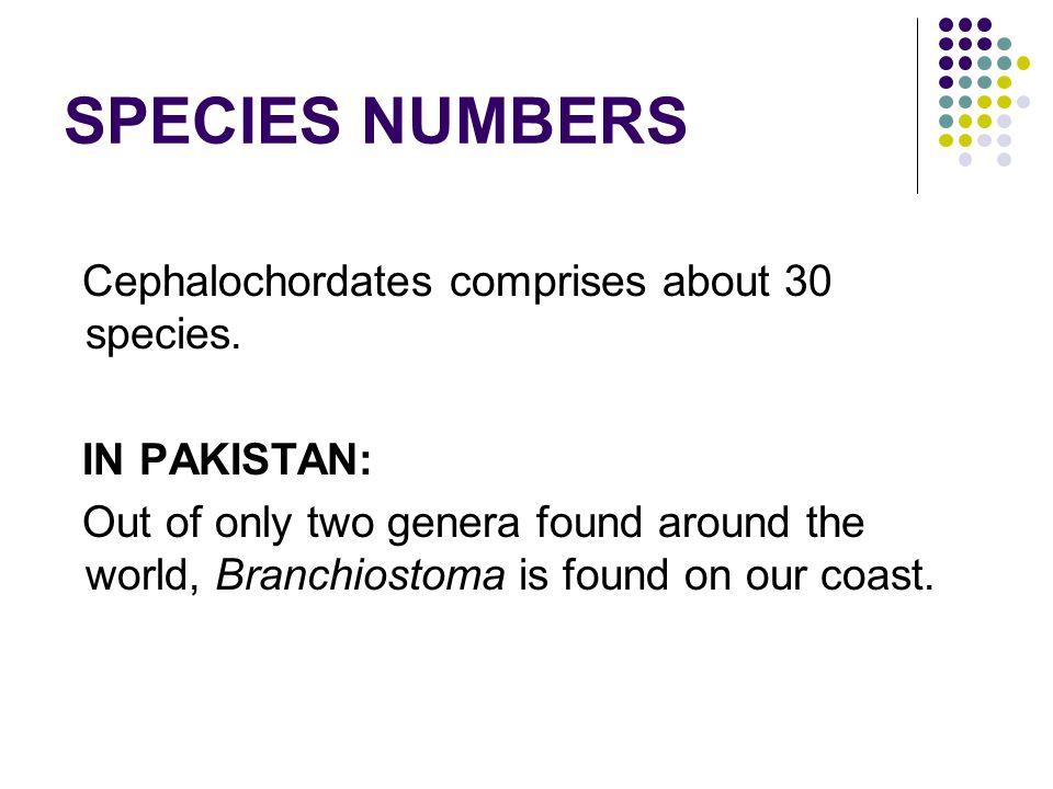 SPECIES NUMBERS Cephalochordates comprises about 30 species.