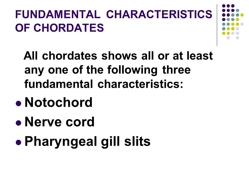 FUNDAMENTAL CHARACTERISTICS OF CHORDATES All chordates shows all or at least any one of the following three fundamental characteristics: Notochord Ner