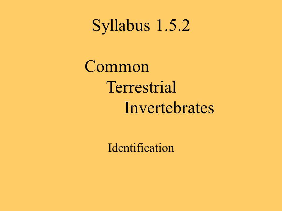 Syllabus 1.5.2 Common Terrestrial Invertebrates Identification
