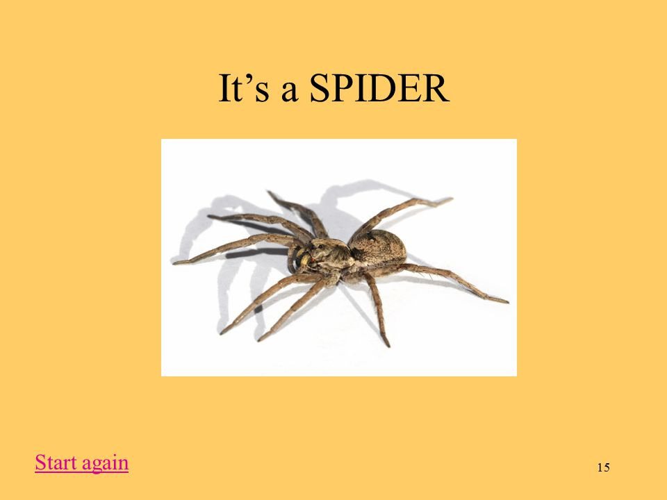 15 It's a SPIDER Start again