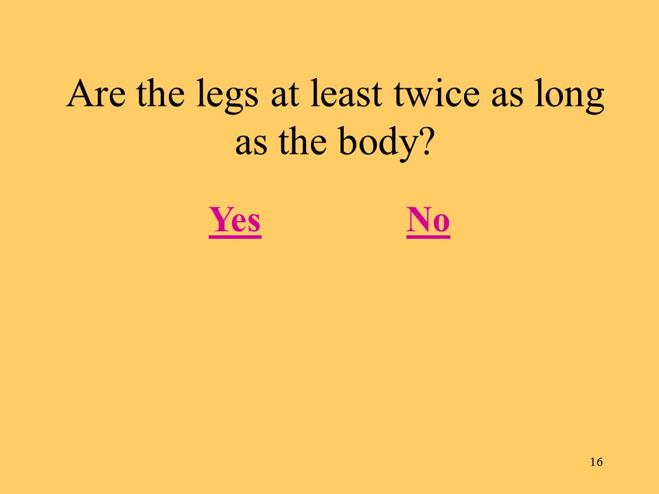 16 Are the legs at least twice as long as the body? YesNo