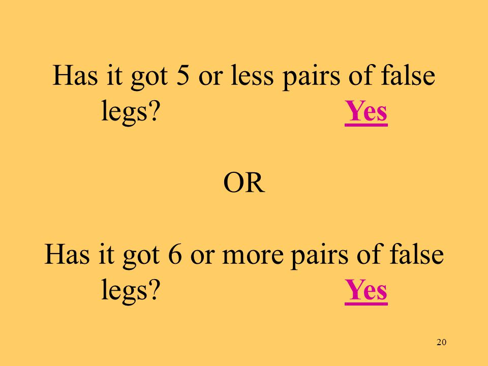 20 Has it got 5 or less pairs of false legs.Yes OR Has it got 6 or more pairs of false legs.