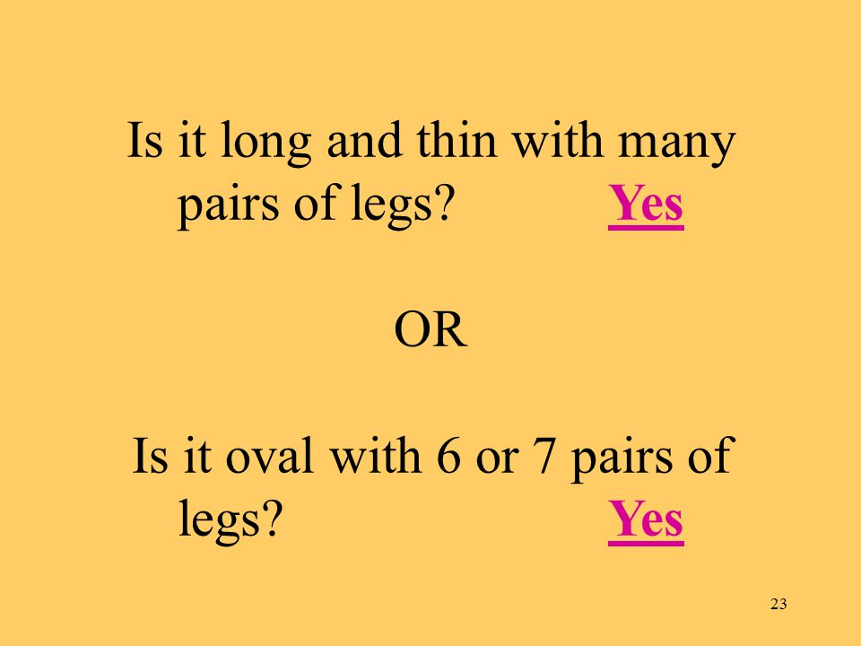 23 Is it long and thin with many pairs of legs Yes OR Is it oval with 6 or 7 pairs of legs YesYes