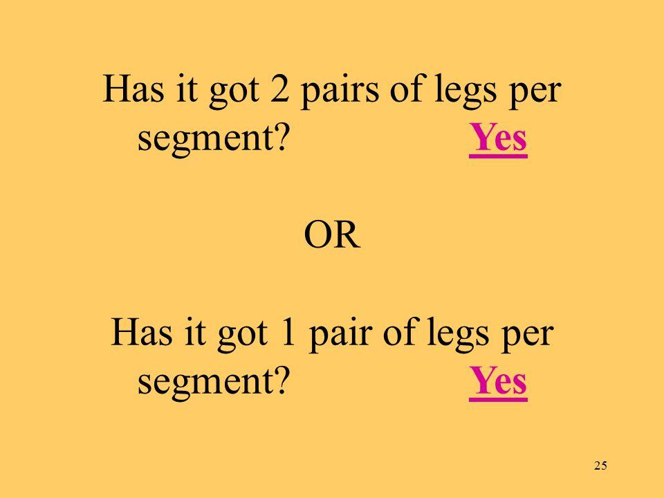 25 Has it got 2 pairs of legs per segment? Yes OR Has it got 1 pair of legs per segment? YesYes