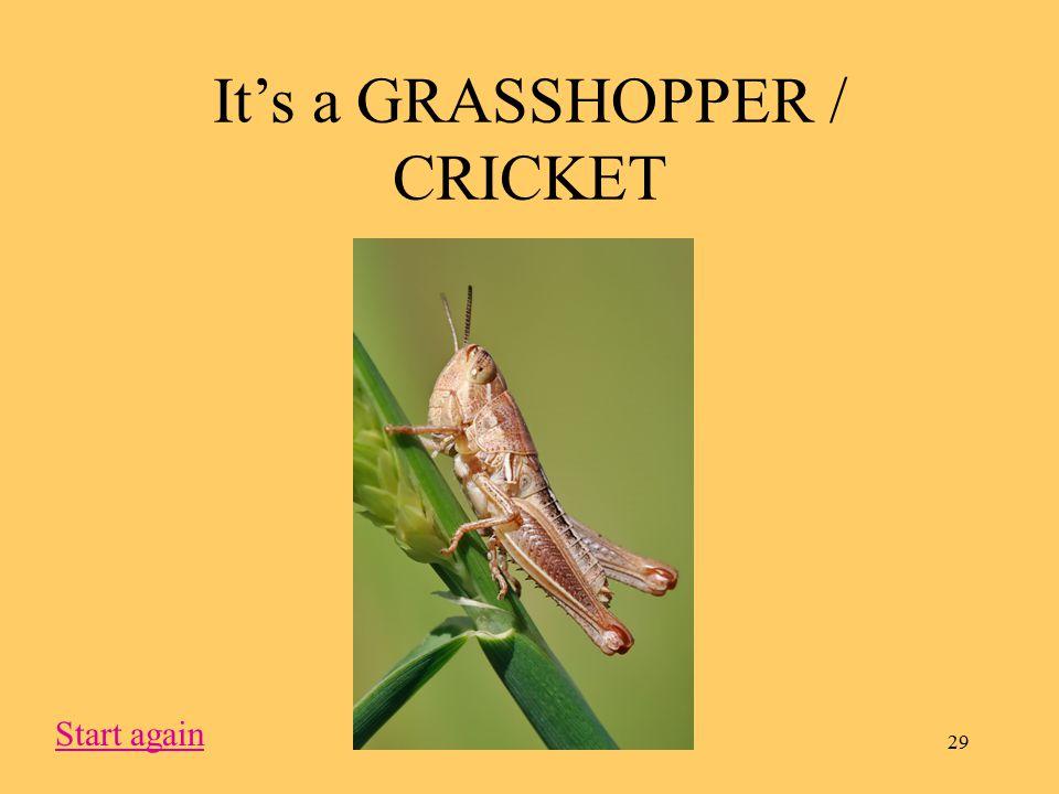 29 It's a GRASSHOPPER / CRICKET Start again