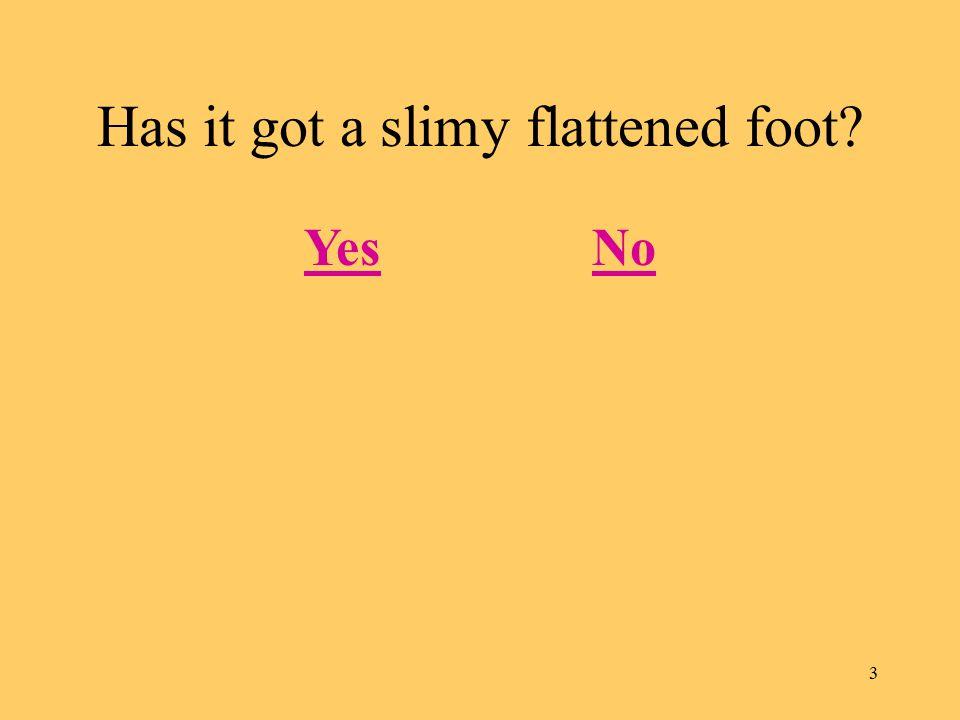 3 Has it got a slimy flattened foot? YesNo