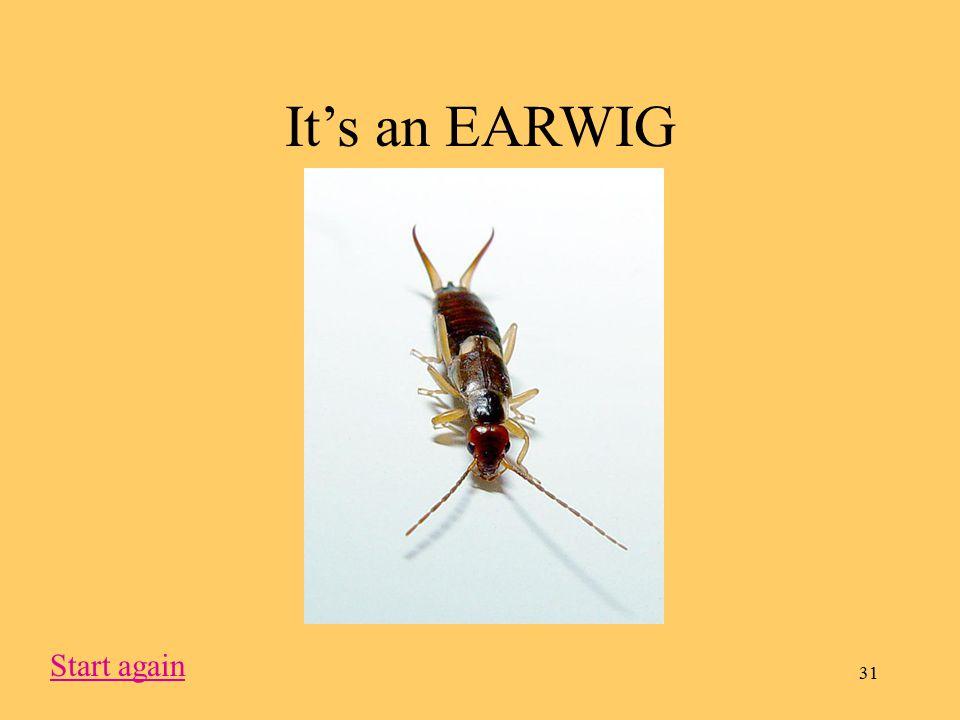 31 It's an EARWIG Start again