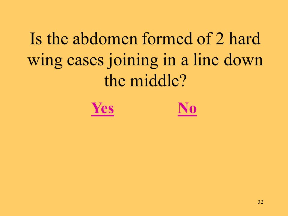 32 Is the abdomen formed of 2 hard wing cases joining in a line down the middle? YesNo