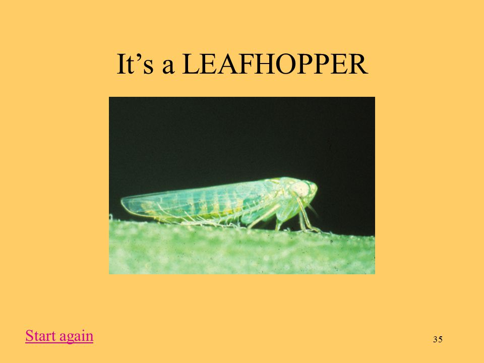 35 It's a LEAFHOPPER Start again