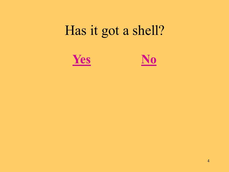 4 Has it got a shell? YesNo