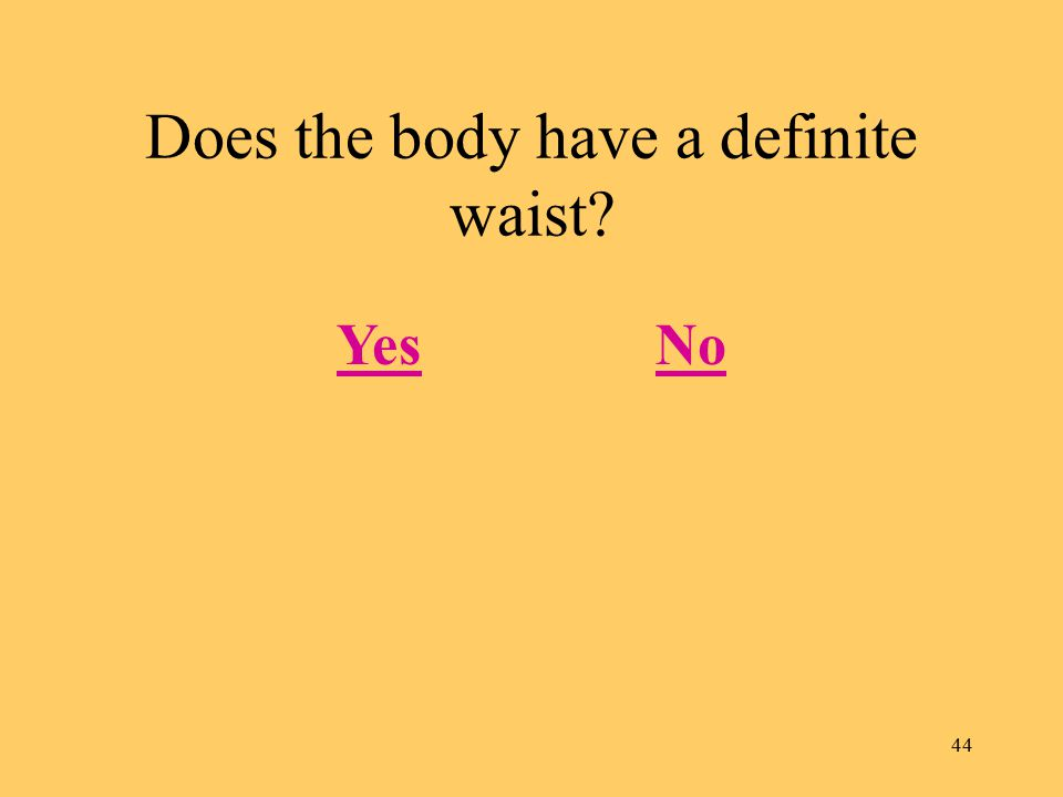 44 Does the body have a definite waist? YesNo